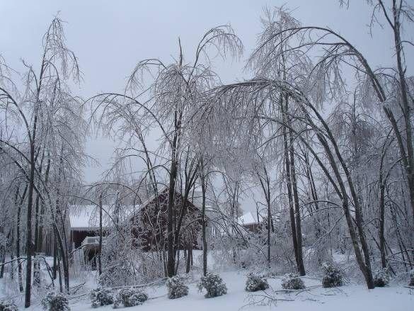 The Great Ice Storm Jan 2009 Owensboro Photo Album Topix Owensboro Kentucky Owensboro Owensboro Ky