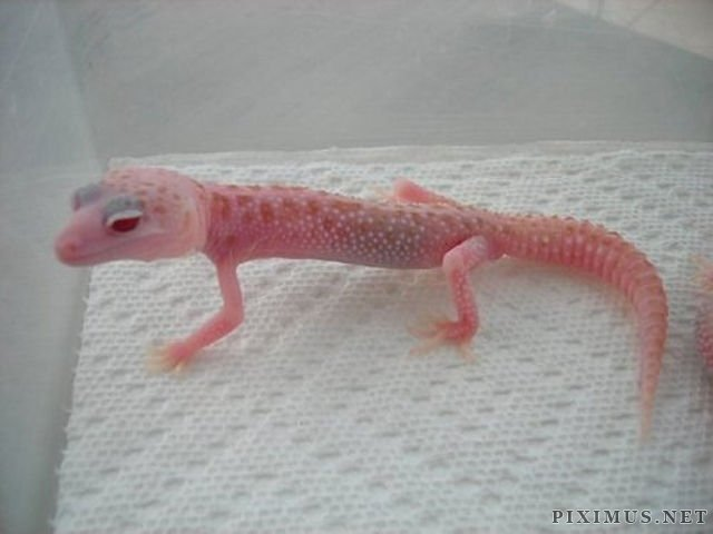 Great Pictures of Albino Animals | Animals #albinoanimals