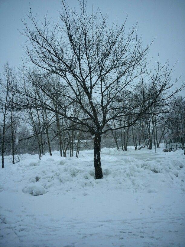 Yksinäinen  puu