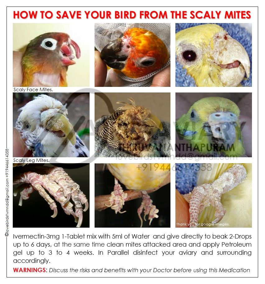 How To Save Your Bird From The Scaly Mites Birds Love Birds Pet Bird Care