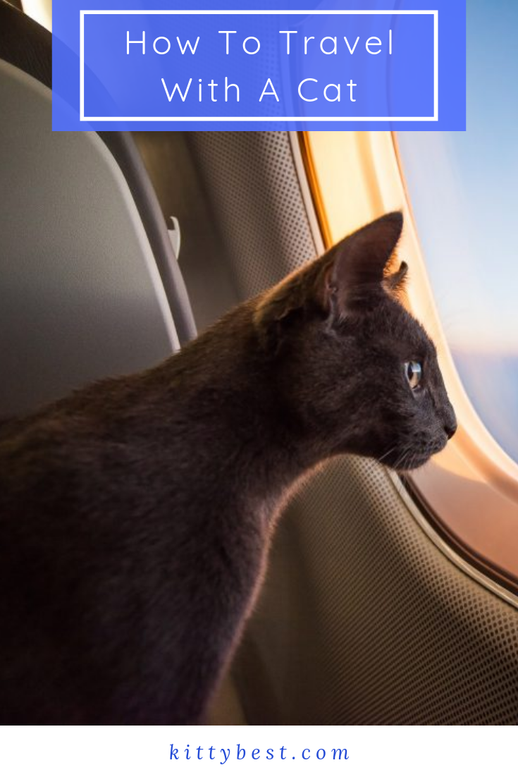 How To Travel With A Cat Cats Puppy Pads Training Travel