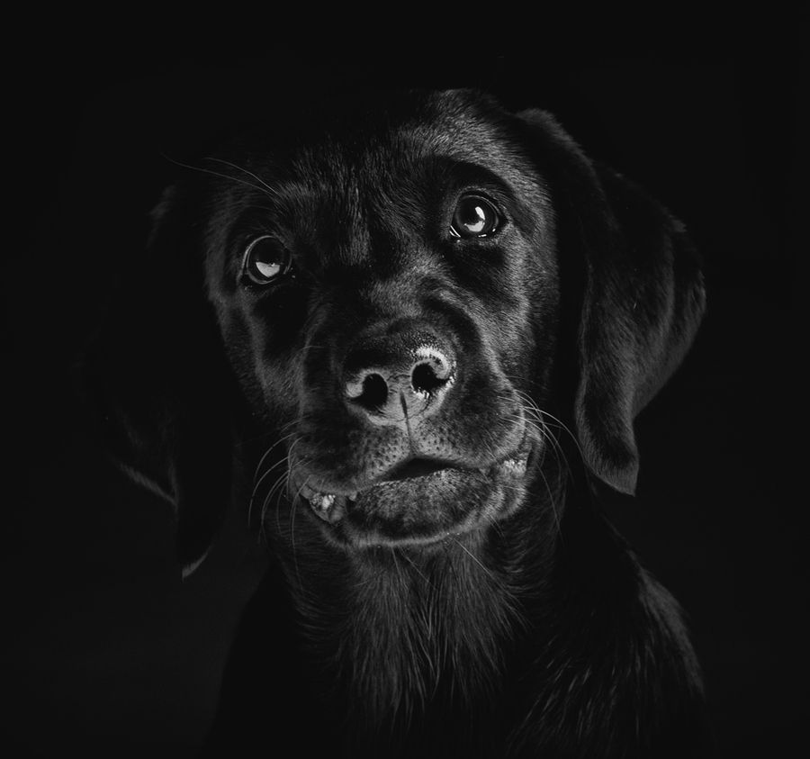Shutter Speed Pictures Of Dogs