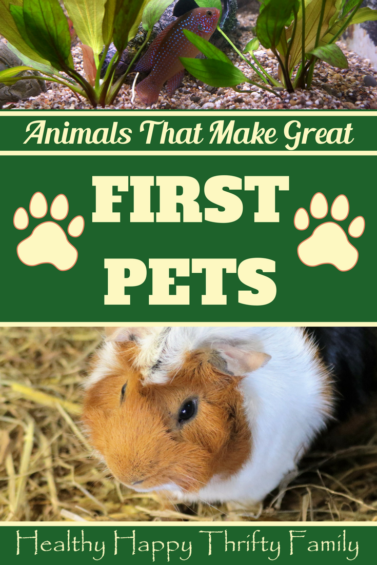 Animals That Make A Great First Pet Easy Pets Best Pets For Kids Animals For Kids