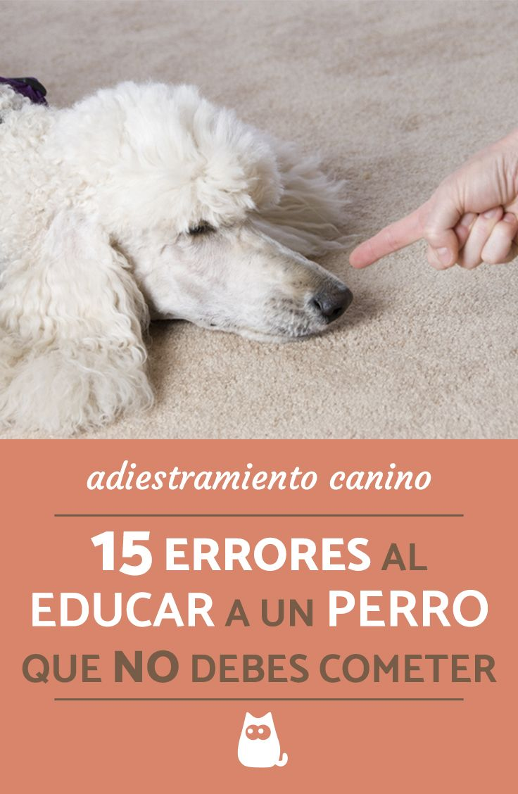 Photo of 15 errores al adiestrar a un perro