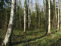 Resultado de imagen para Imágenes de árboles y bosques