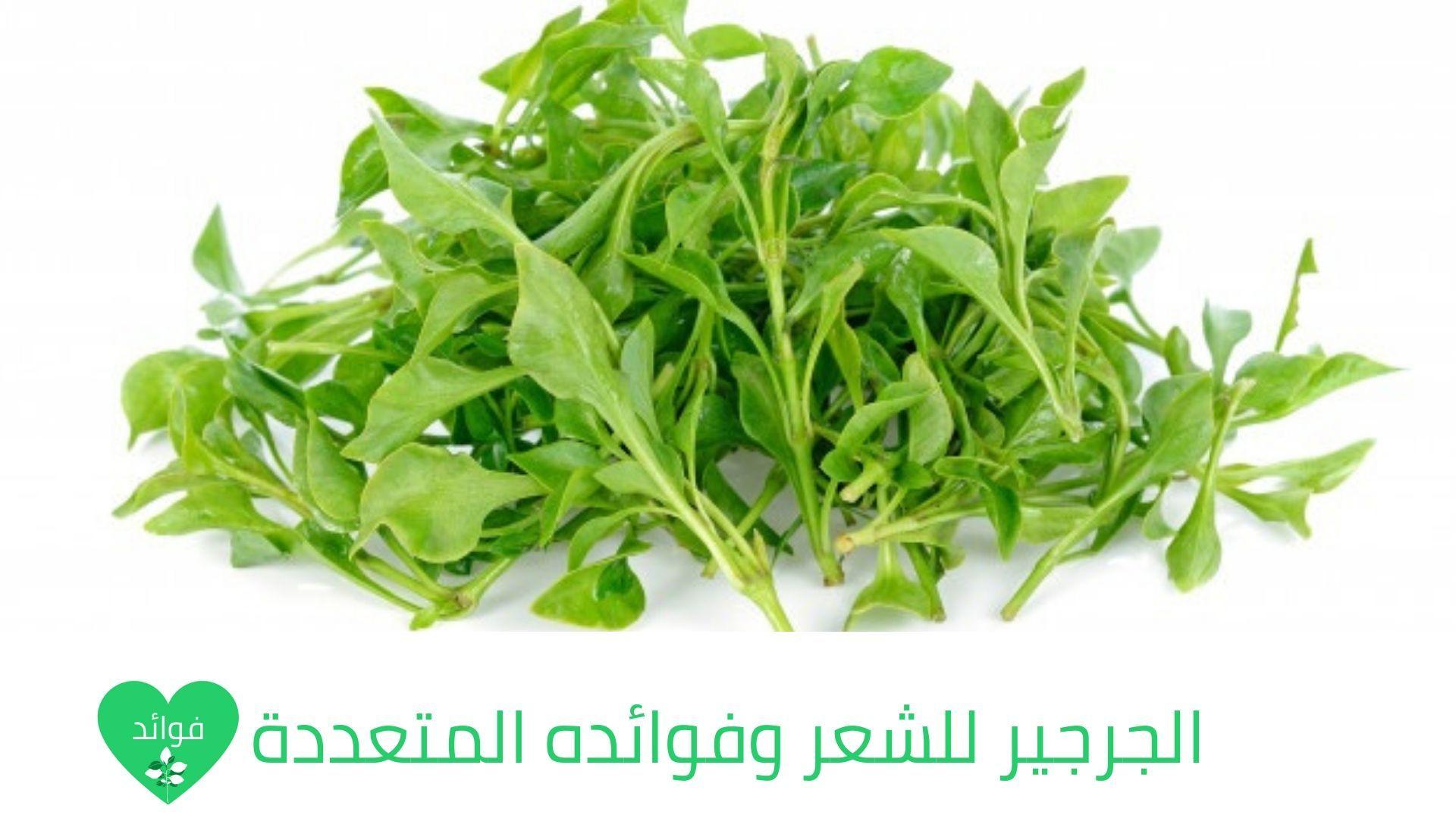 الجرجير للشعر وفوائده المتعددة للشعر المتساقط والتالف والضعيف Watercress Watercress Benefits Leafy Plants
