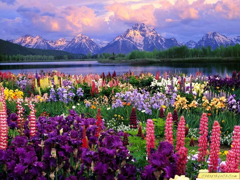 25 Fondo paisaje flores