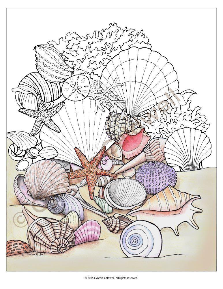 seashells coloring page instant download por
