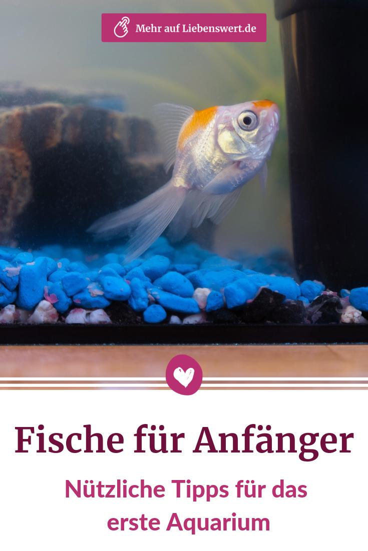 Fische Fur Anfanger Nutzliche Tipps Fur Einsteiger Fische Aquarium Tipps Aquarium Fur Anfanger