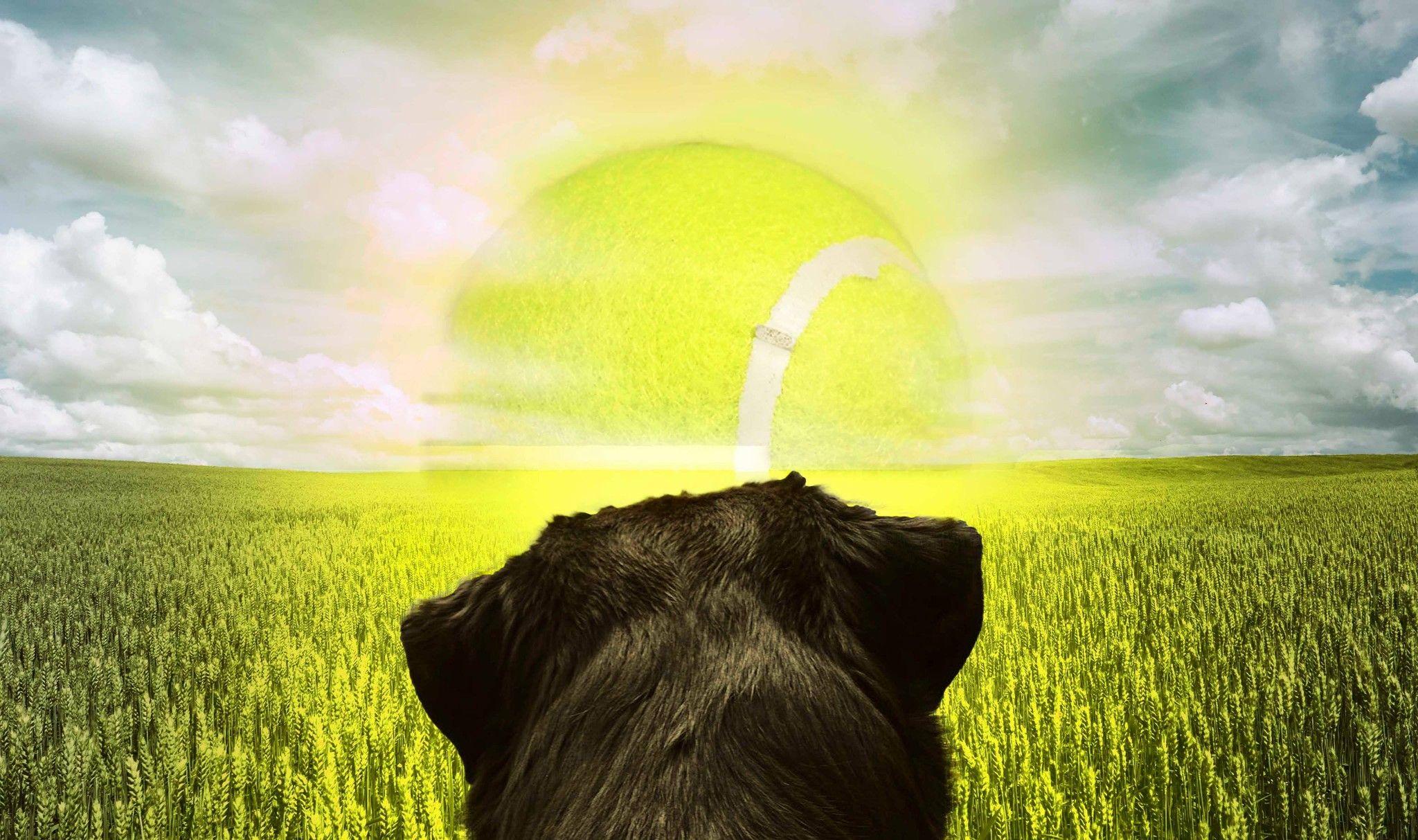 Dog Days Of Summer Michelle Mackey Surrealism Dog Days 11x17 Dogs