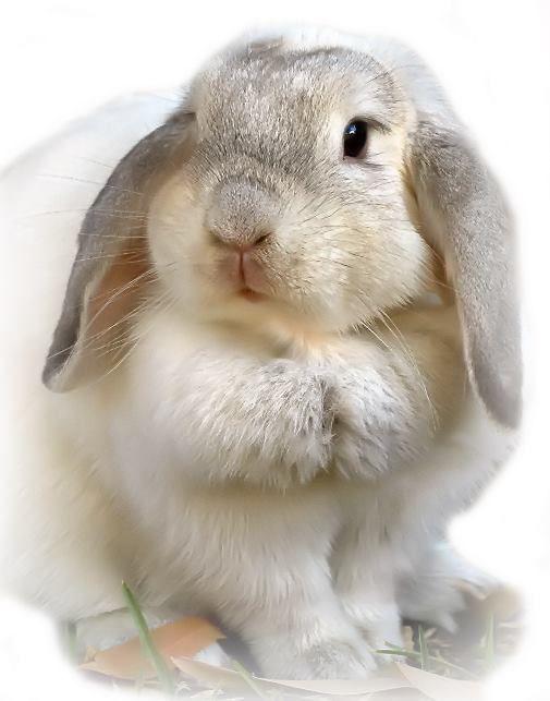 figuratief lijkt op de werkelijkheid wishlist pinterest kaninchen s e tiere und s e. Black Bedroom Furniture Sets. Home Design Ideas