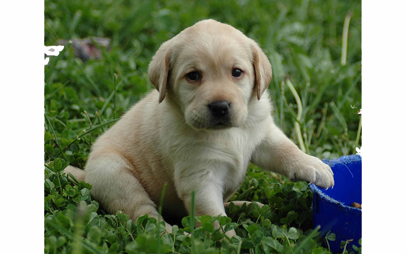 Looking for the perfect supplement for your puppy