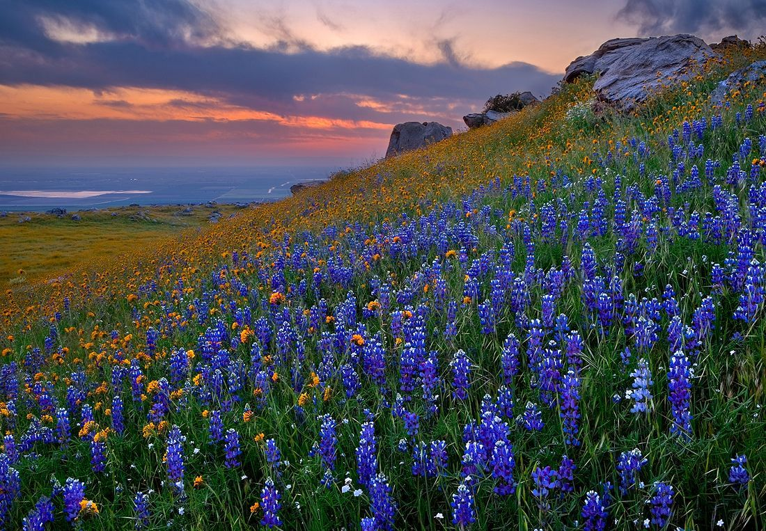 Texas Bluebells Wildflowers World Most Beautiful Place