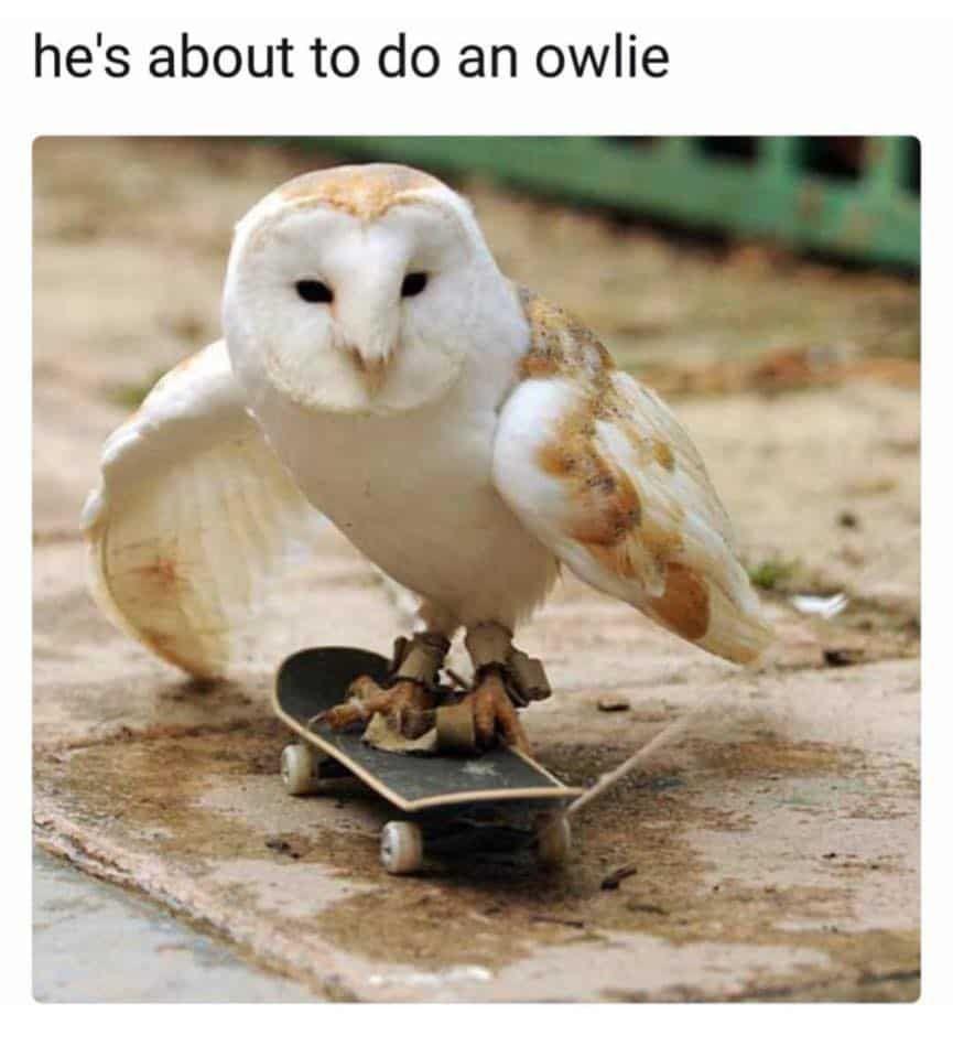 Animal Memes Of The Day 32 Pics – Ep58 #animalmemes #memes - Lovely Animals World #funnyanimalpics