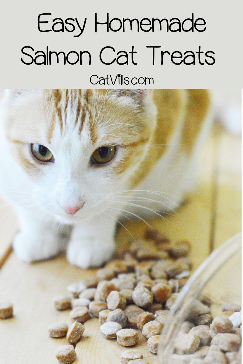 Homemade Salmon Cat Treats Recipe Salmon cat, Best cat