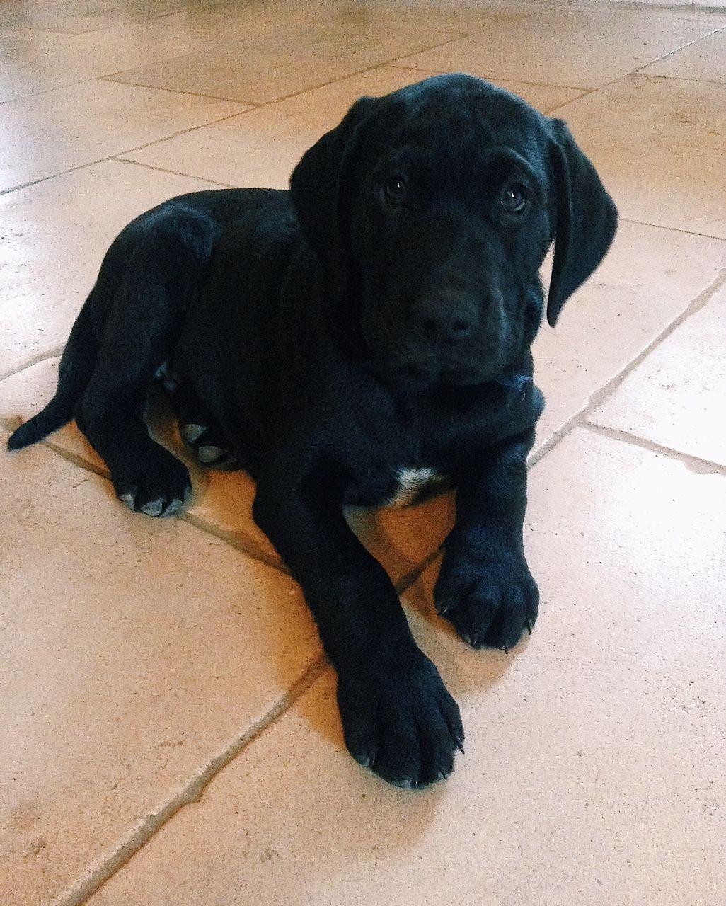 Marcel a deux mois!