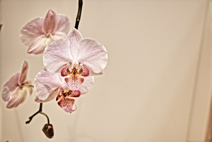 Orchidaceae by Ralph Michel on 500px