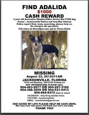 Missing Adalida Female Australian Shepard Blue Heeler Missing Since 08 22 2012 From Jacksonville Florida Dogs Losing A Dog Cash Rewards