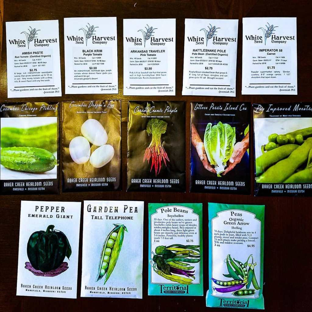 Urban Vegetable Gardening For Beginners: 9 Vegetables You Should ONLY Plant From Seed