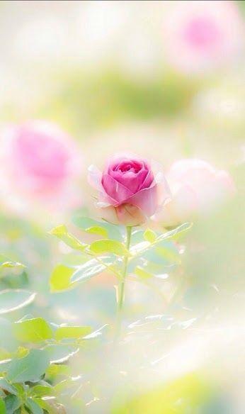 with love flower green pinterest rosas flores flores