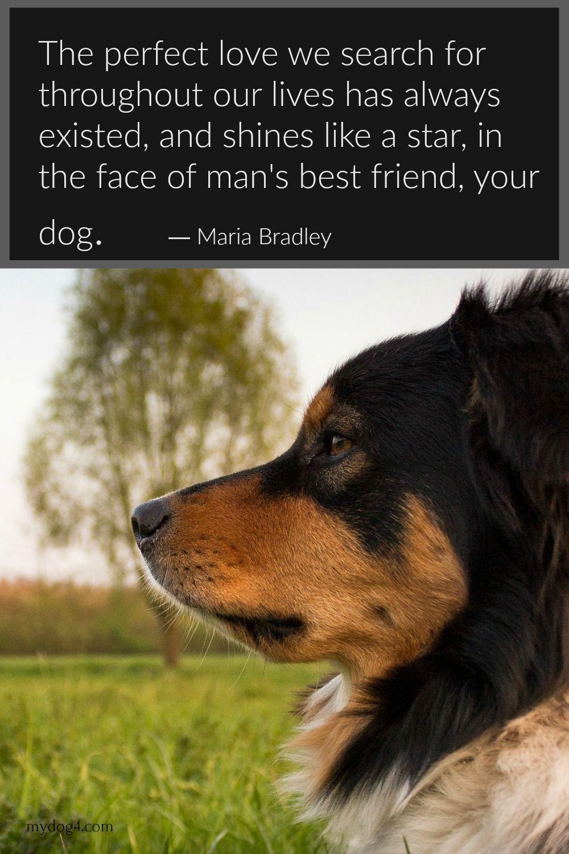 Dog Quotes Dog Quotes Dog Love Dog Life