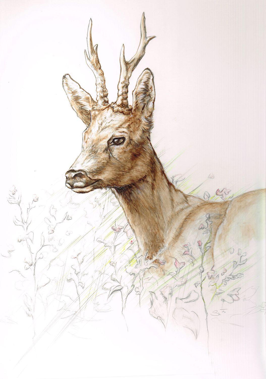 rehbock portrait portrait of a roe buck wildmotive. Black Bedroom Furniture Sets. Home Design Ideas