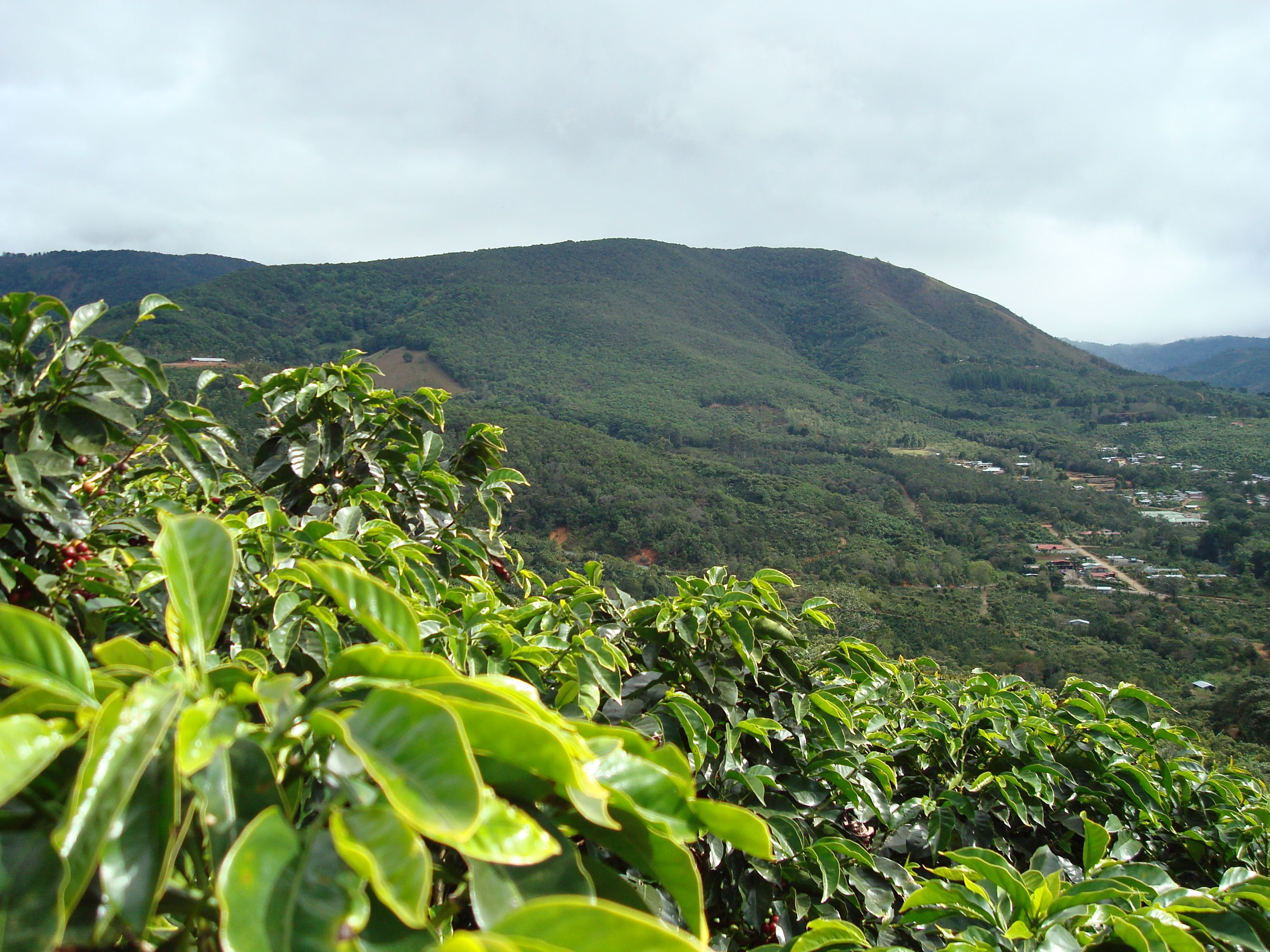Coffee Farm - San Marcos, Tarrazu Costa Rica; start an eco-sourced ...