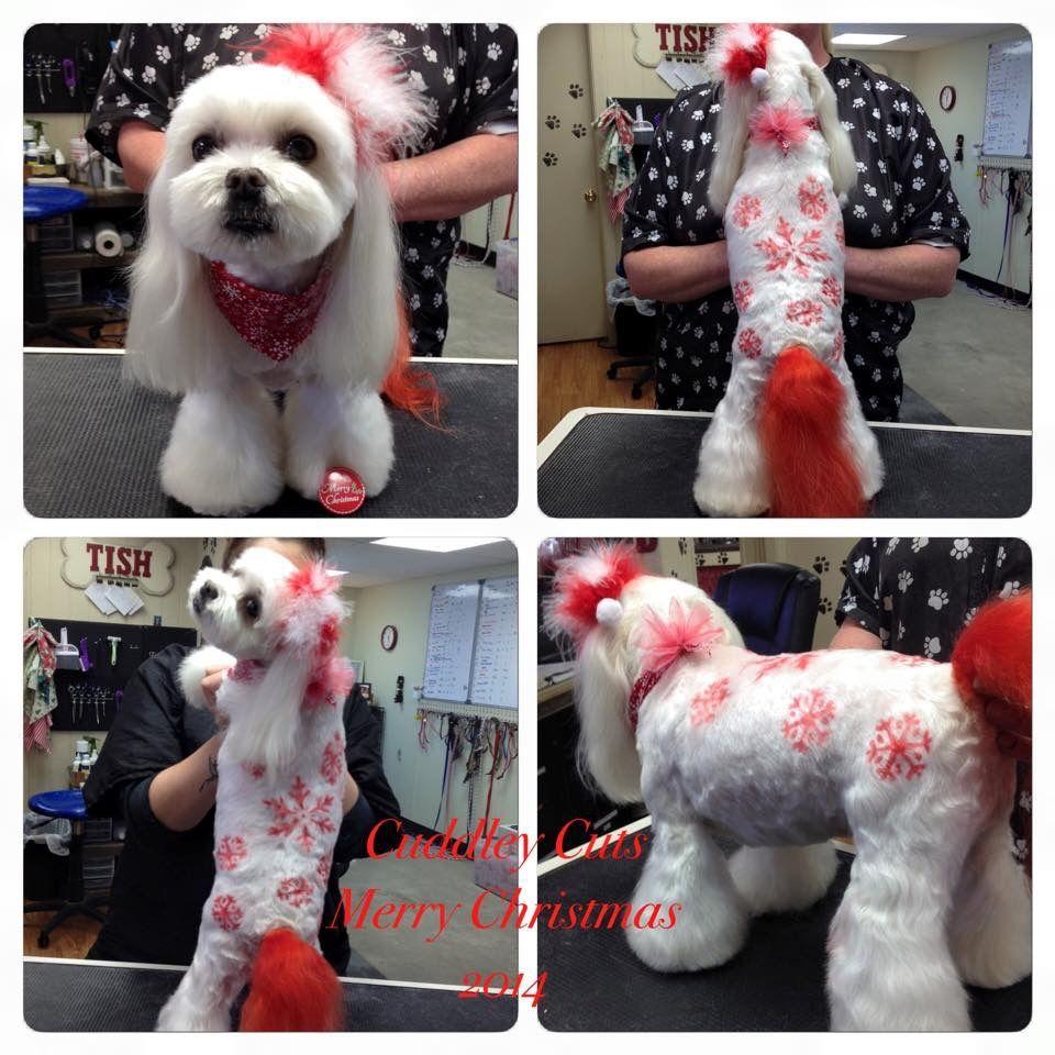 -repinned- Snowflakes. Creative dog grooming