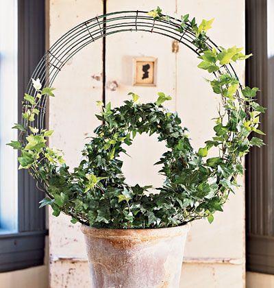 формирование вьющихся комнатных растений: 23 тыс ...