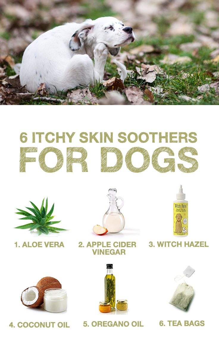 Does Your Pup Struggle With Itchy Skin Here Are  Natural Skin Soothers That