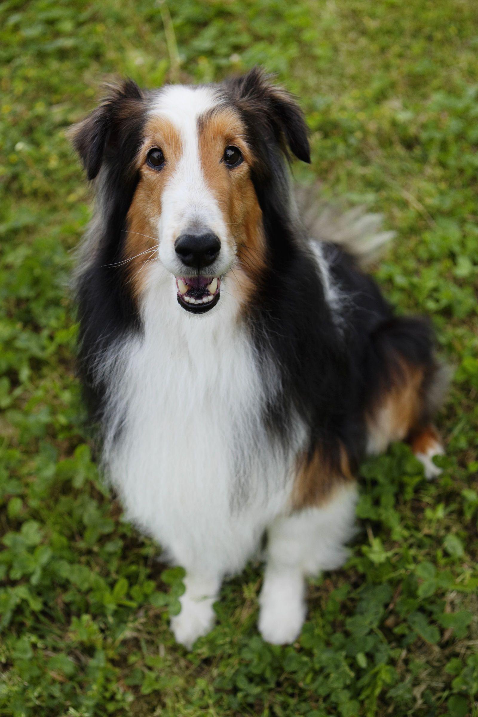 100 Unique Dog Names For Every Kind Of Pup Sheep Dog Puppy Shetland Sheepdog Dog Breeds