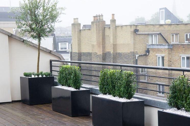alberi per terrazzi