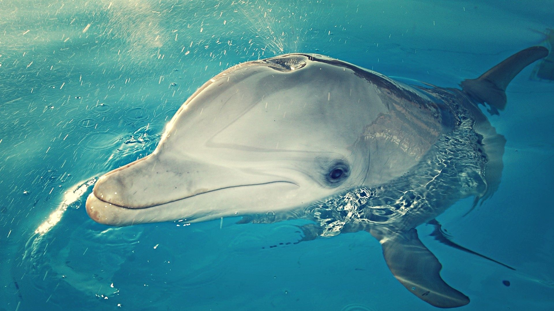 Download Wallpaper 1920x1080 Dolphin Head Spray Water Full Hd 1080p Hd Background