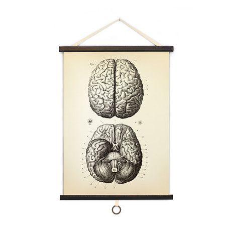 Vintage Anatomy // Brains