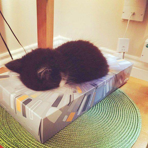 Peçete kutusunda dahi uyuyakalacak kadar şapşallardır.