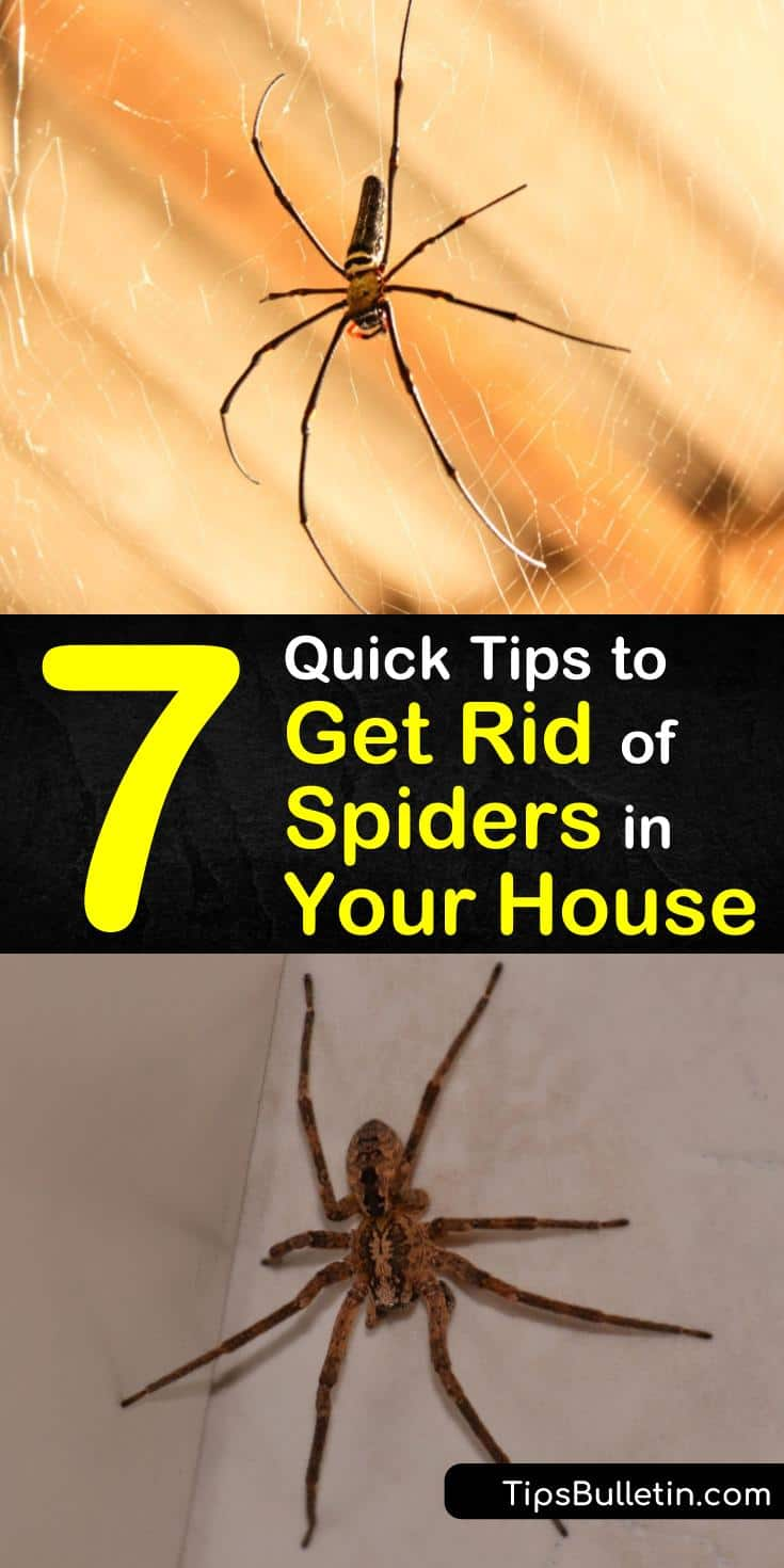 How To Get Rid Of Spiders On Your Deck