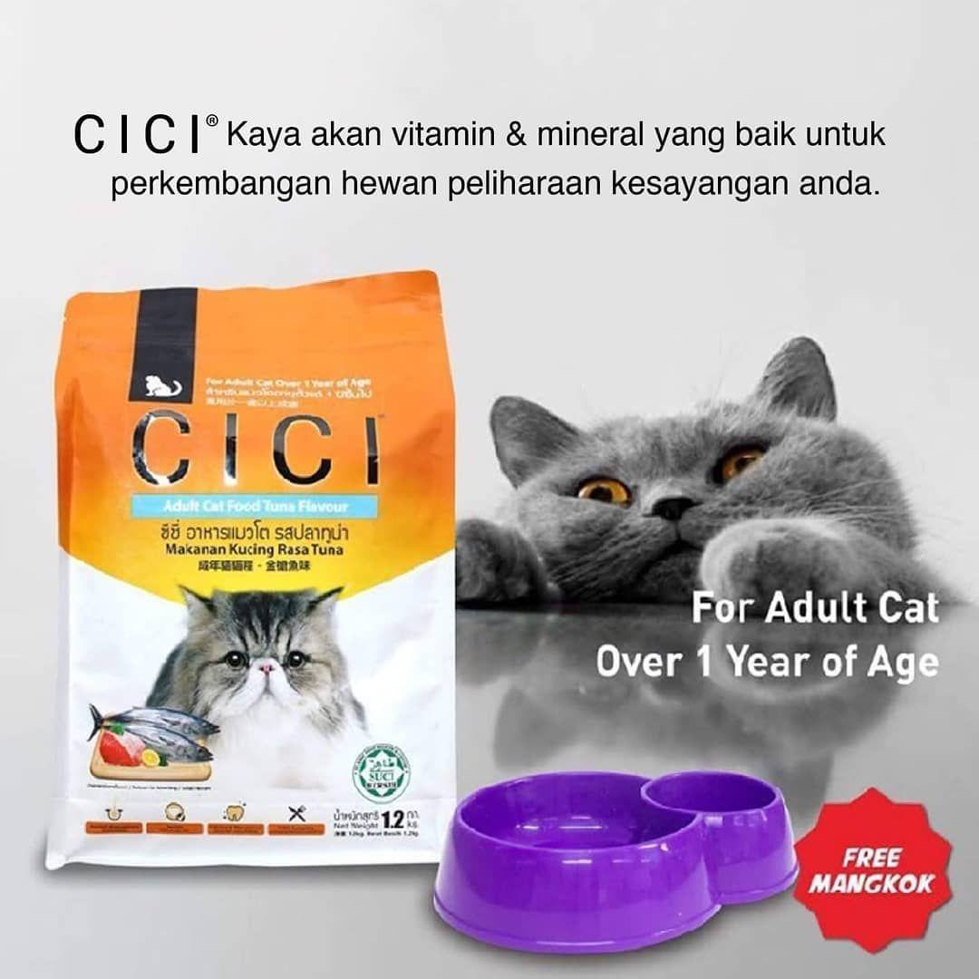 Hi Little Paw Dry Food Memiliki Peranan Penting Bagi Kesehatan Kucing Teksturnya Yang Keras Membantu Untuk Menjaga Kesehatan Cat Food Kittens Cutest Kittens