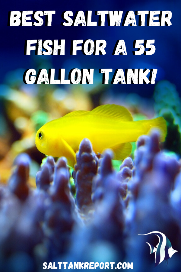 Best Saltwater Fish For A 55 Gallon Tank 55 Gallon Tank Saltwater Tank Saltwater