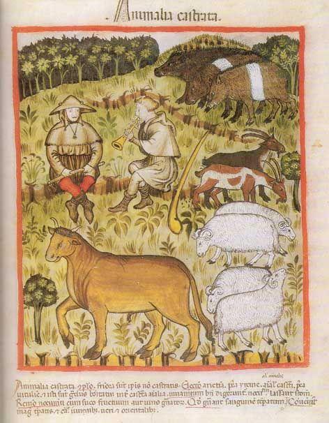 Eine Abbildung eines spätmittelalterlichen Gesundheitsbuches illustriert hier alle Tiere, die zu Mastzwecken kastriert wurden.  Tacuinum sanitatis, Wien Österreichische Nationalbibliothek, Cod. Vindob. S. n. 2644, Oberitalien um 1390, folio 71r