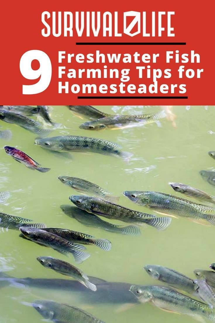 Freshwater Fish Farming Tips For Homesteaders | Fish ...