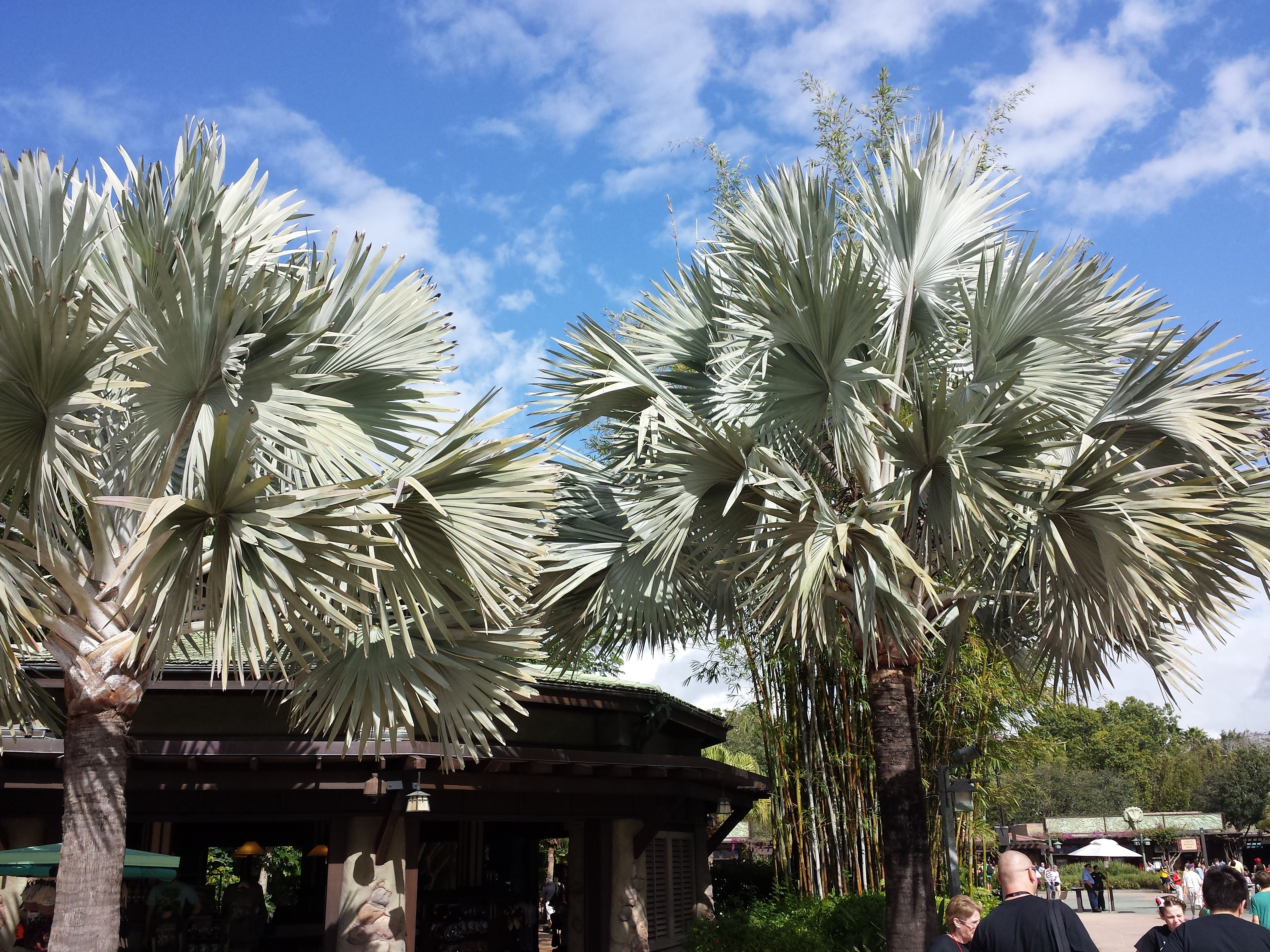 Florida sunshine and beautiful palm trees