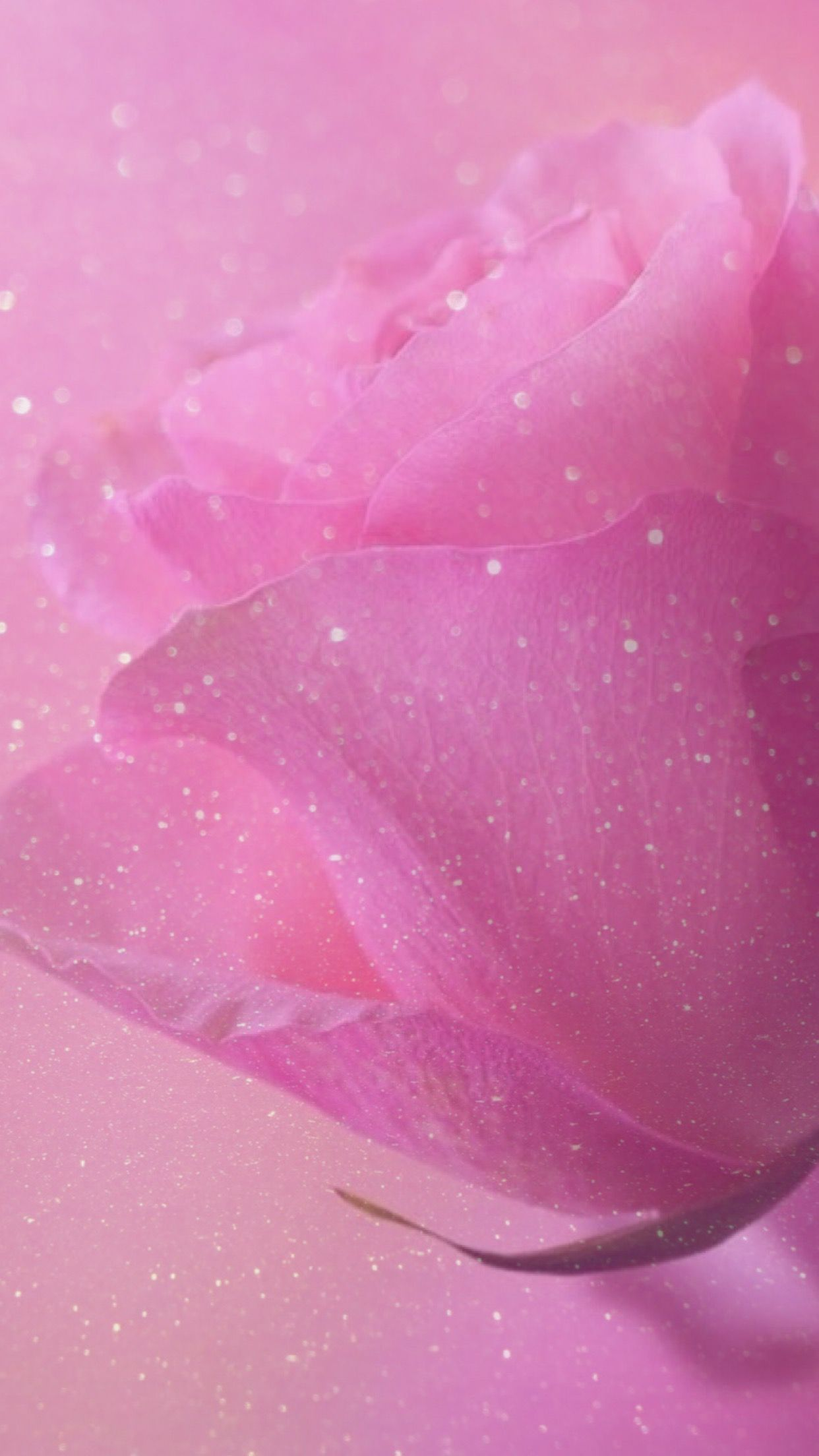 Rose Sparkle Glitter Wallpaper Background Pink Pretty Girly