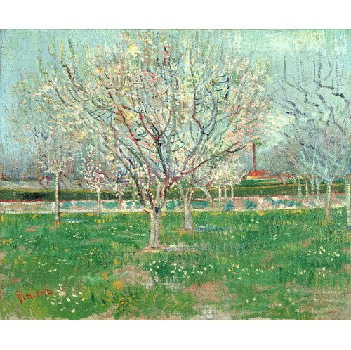 Magnolia Box Orchard In Blossom 1880 By Vincent Van Gogh Art Print