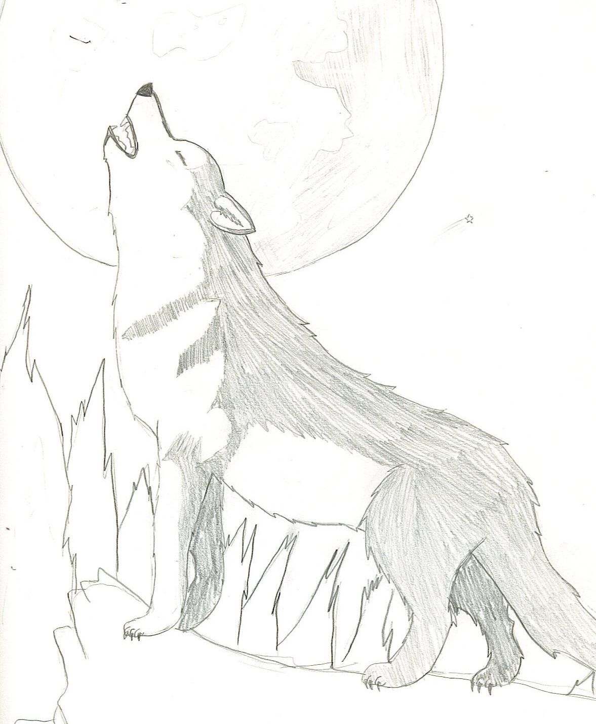 Howling Wolf Drawing Wolffaolan C 2014 Feb 13 2011 Wolf Pictures Pictures To Draw Drawings