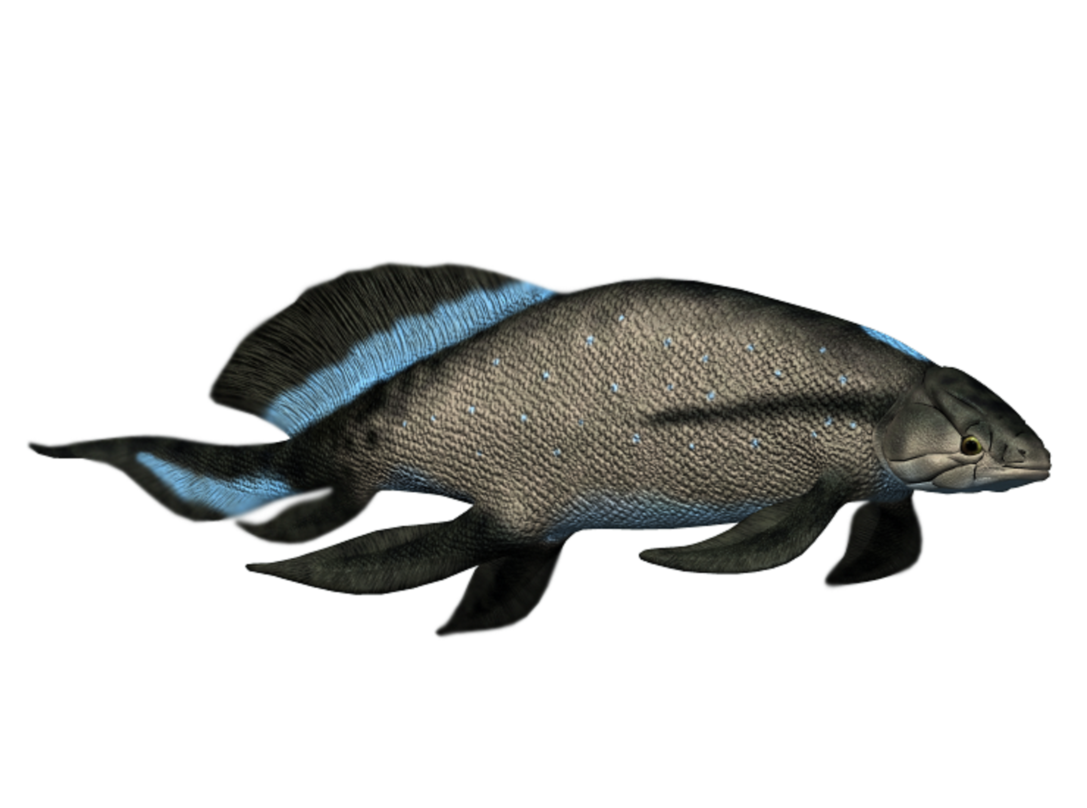Art illustration - Aquatic animals - Scaumenacia curtia: is an extinct genus of prehistoric sarcopterygian, was a fish that lived during the Devonian period, approximately 400 million years ago.  this fish also had lungs to breathe, so it probably had to come to the surface often, to gulp air. The shape of the body of this fish means that it was probably a fast swimming hunter. The specimen was found in Canada. It is from the Devonian period (418 - 362 million years ago).