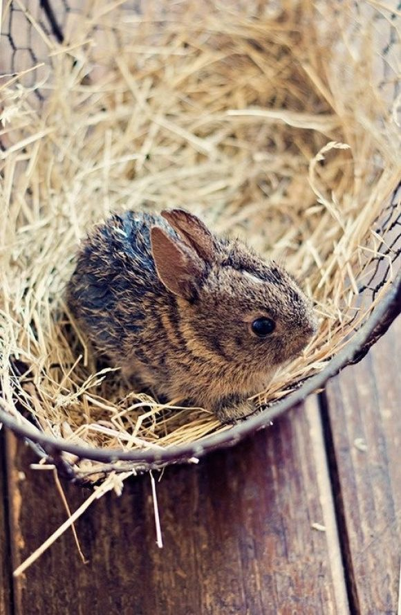 Bunny in a basket. I had a couple of wild babies that I helped to raise.