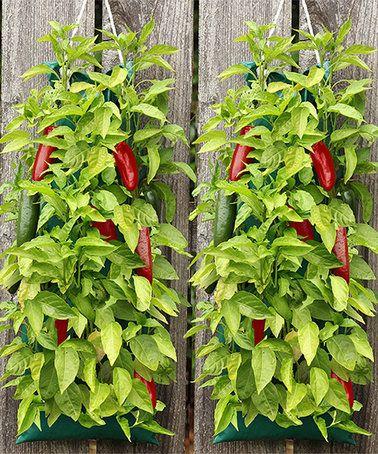 Look at this #zulilyfind! Organic Hanging Jalapeño Pepper Garden #zulilyfinds