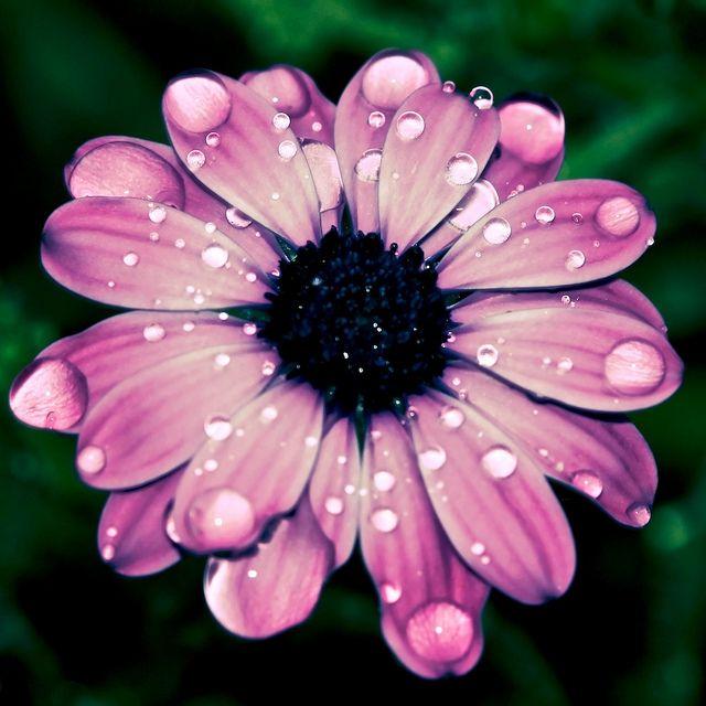 Water petal   Flickr - Photo Sharing!