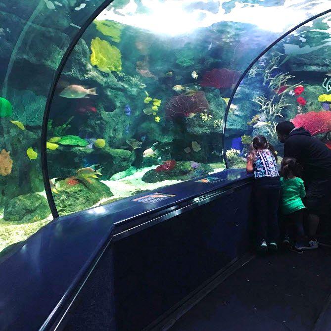 Experience the wonders of the sea at Ripley's Aquarium ...