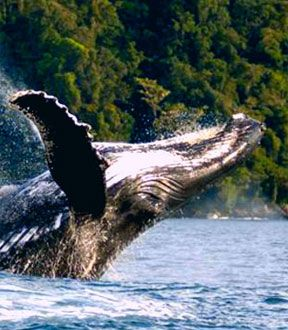 http://www.uniquecolombia.com/wp-content/gallery/gorgona/gorgona-colombia.jpg